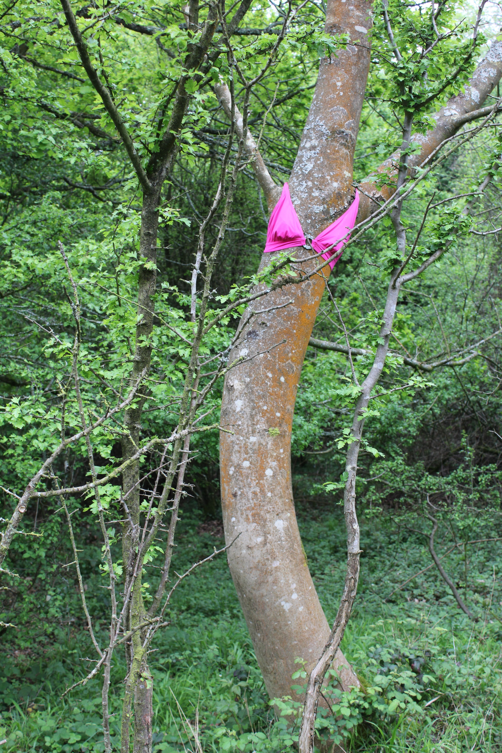 'I clothe the forest with my thoughts and a hot pink bikini top'