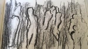 tree bark spirits